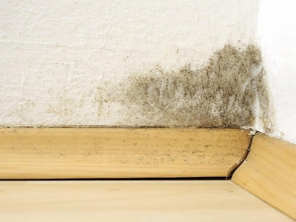 Effective and Non-Toxic Ways to Clean Mould